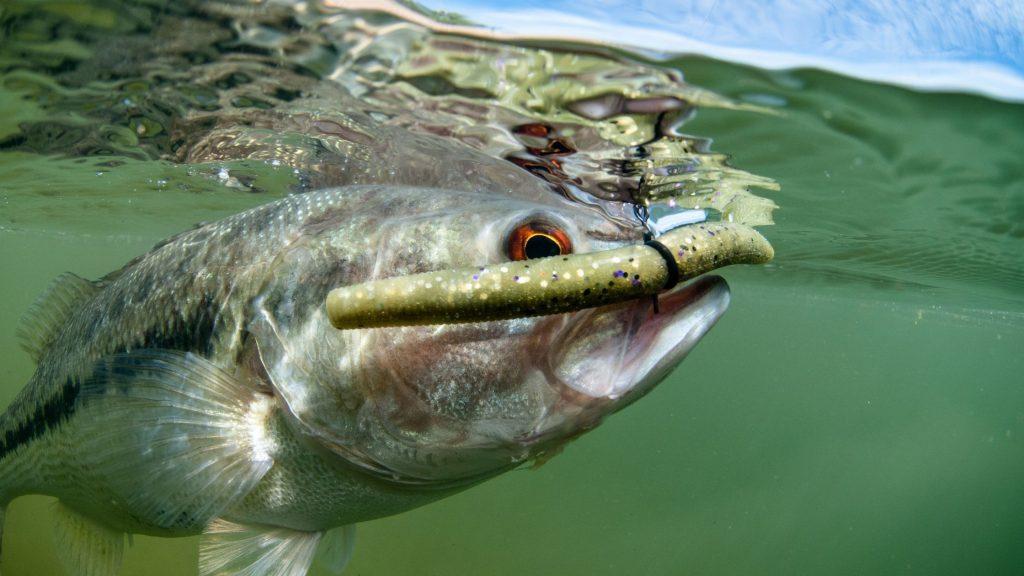 bass lure