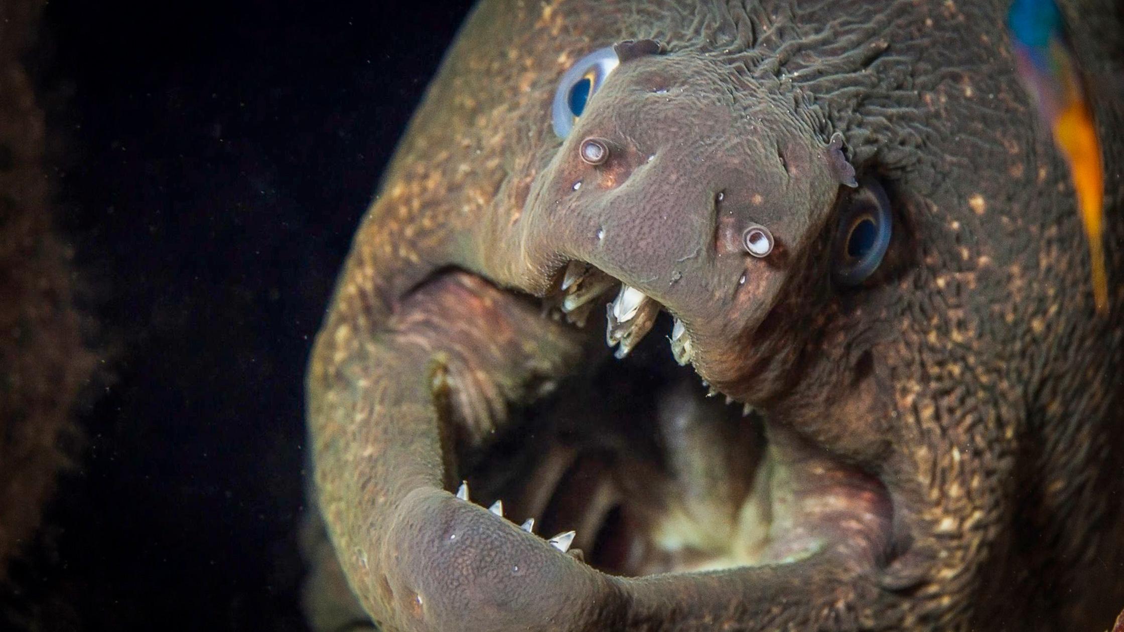Do Eels Have Teeth?