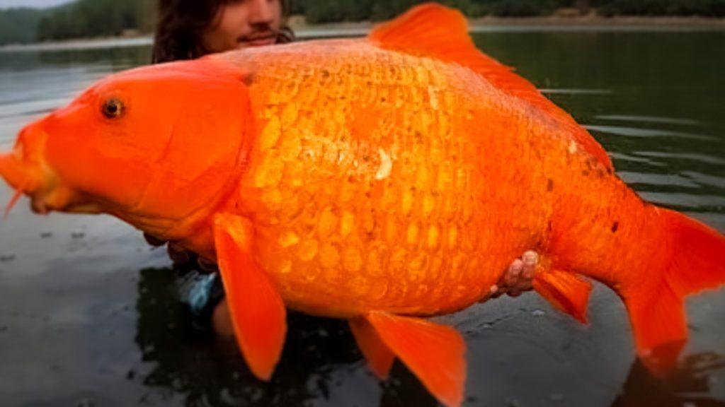 18 Types of Carp Species Explained