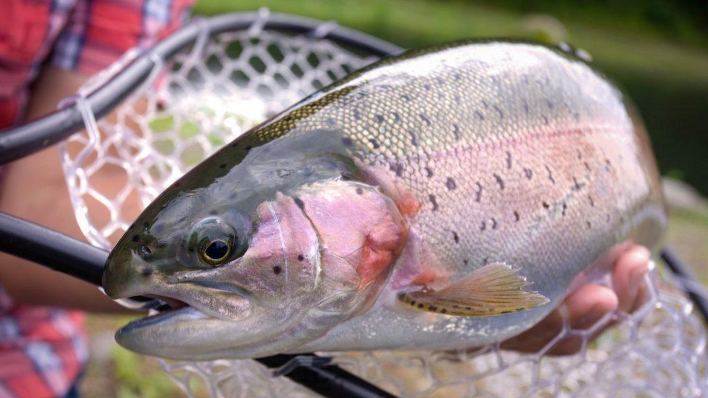Best Secret Baits for Rainbow Trout