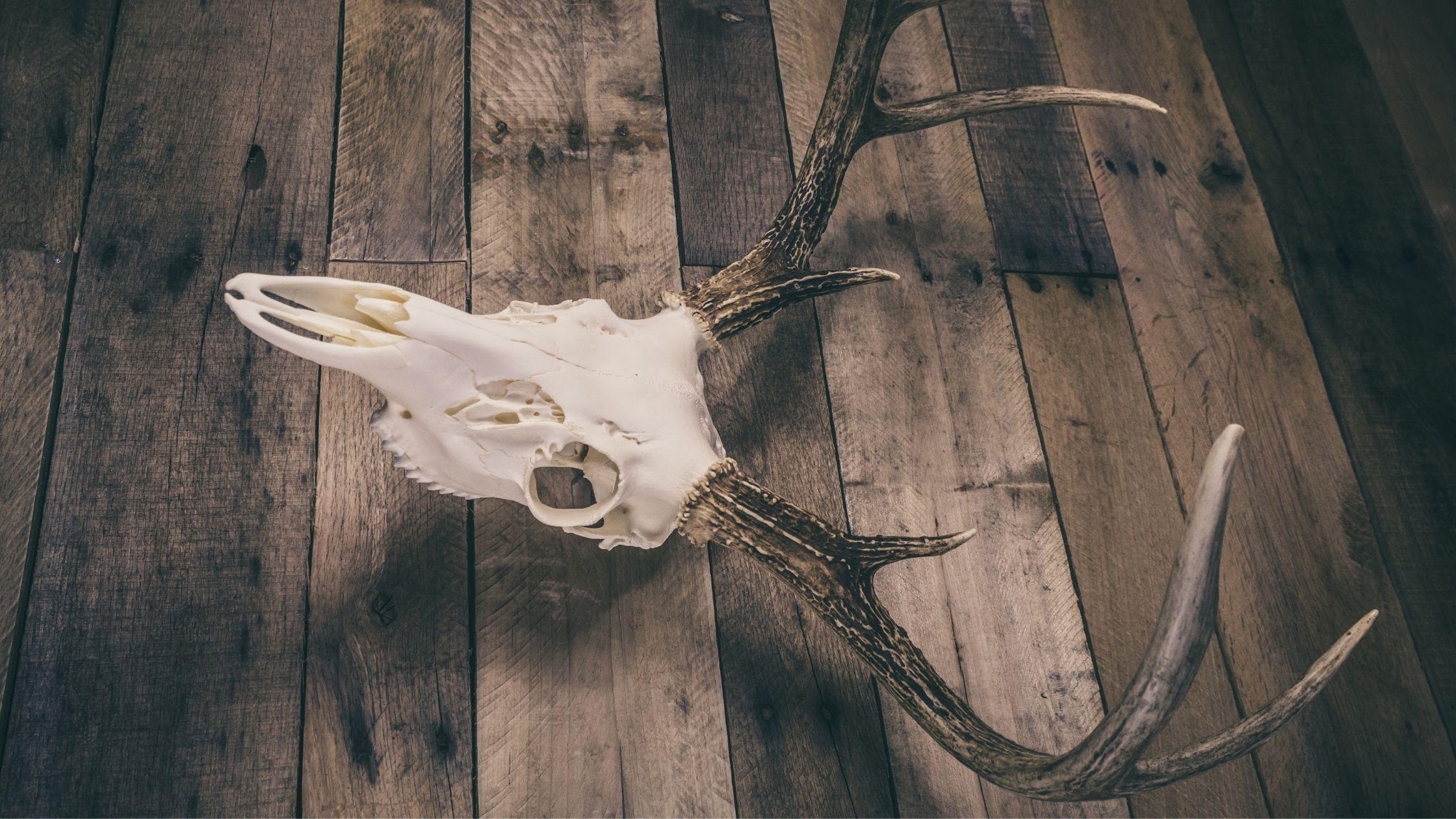 How to Seal Deer Antlers