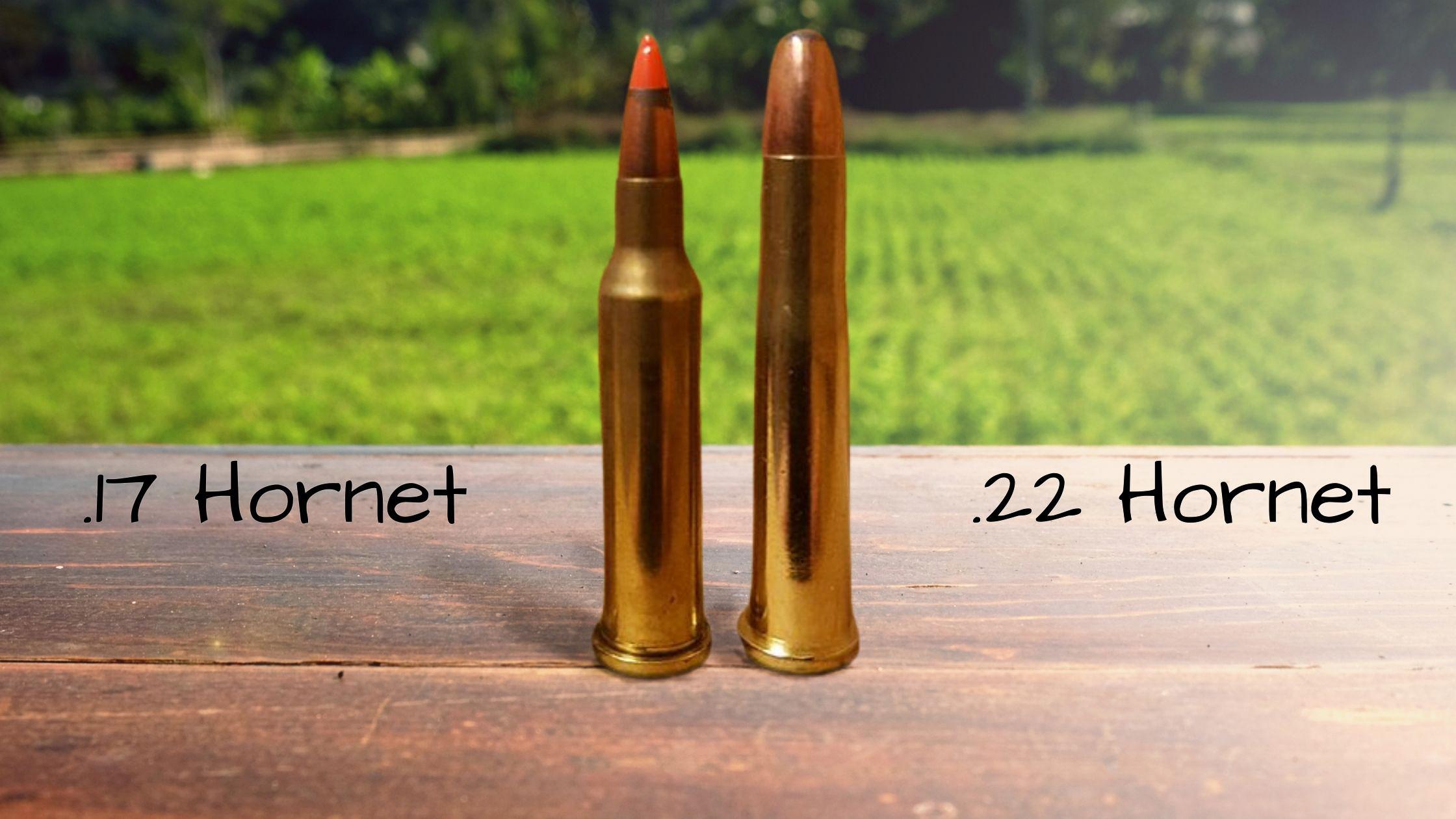 17 Hornet vs 22 Hornet