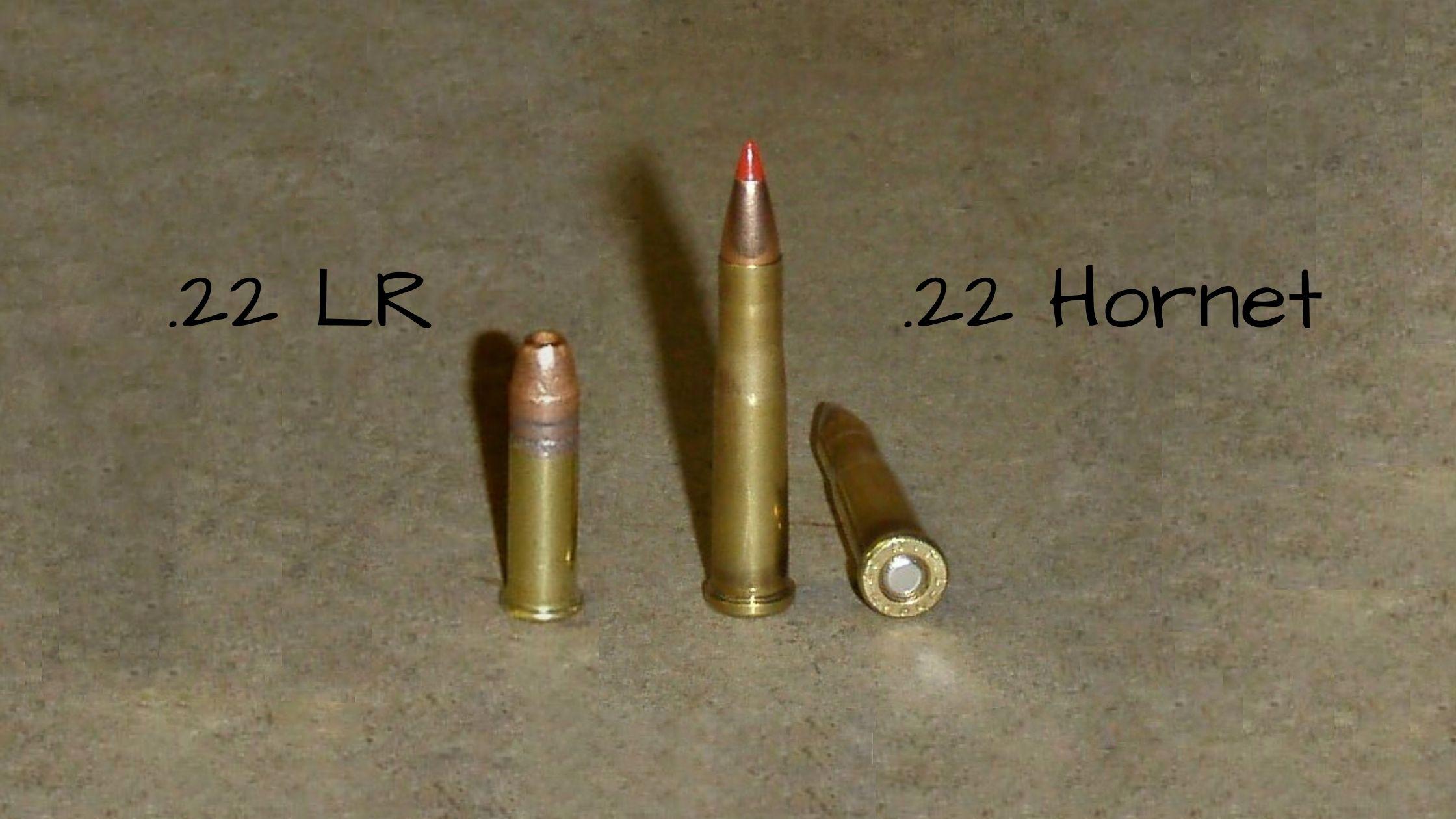 22 Hornet vs 22 LR