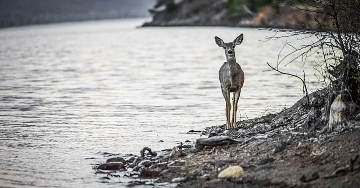 Do Deer Eat Fish