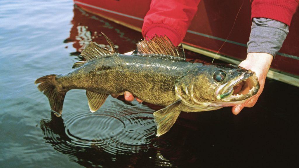 Fishing from a jon boat